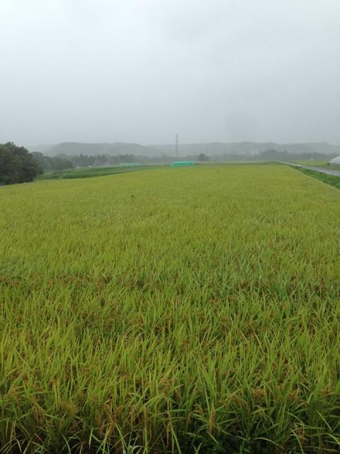 久保農園では、他の田んぼで収穫されたお米とのブレンドはいたしません!