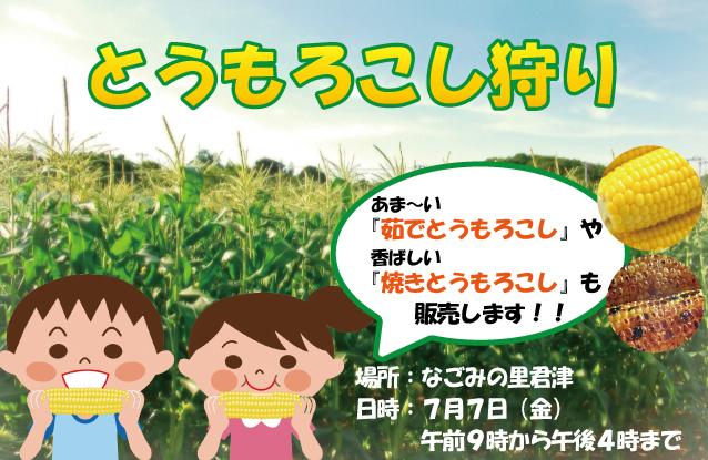 「とうもろこし狩り」開催!!