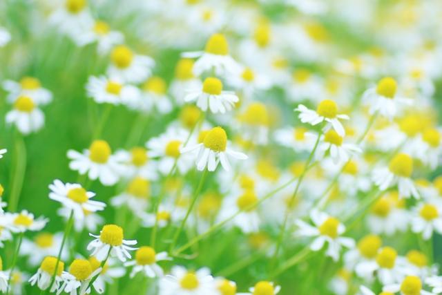 ガーデニング花壇の設計・施工、芝生貼り付け、コニファー類の植栽など、ご要望にお応えします!