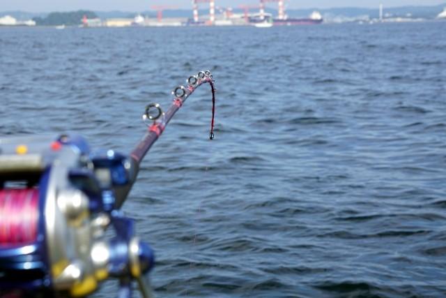 【Y's MARE】夏です!船をチャーターして東京湾の釣りを楽しみませんか?