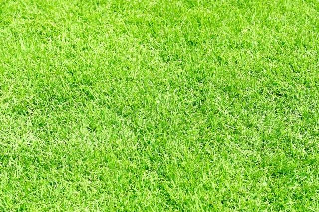 芝生のことならみつば造園にご相談ください!