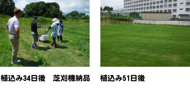 「平成29年度芝生化プロジェクト」植込み後の芝生の様子