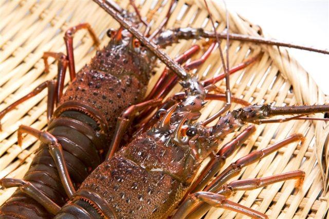 【極上会席】伊勢海老&鮑&金目鯛付き!房総の3大食材を満喫プラン!