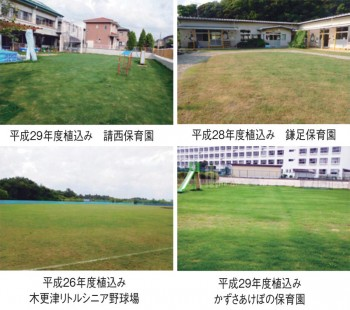 芝生化プロジェクト