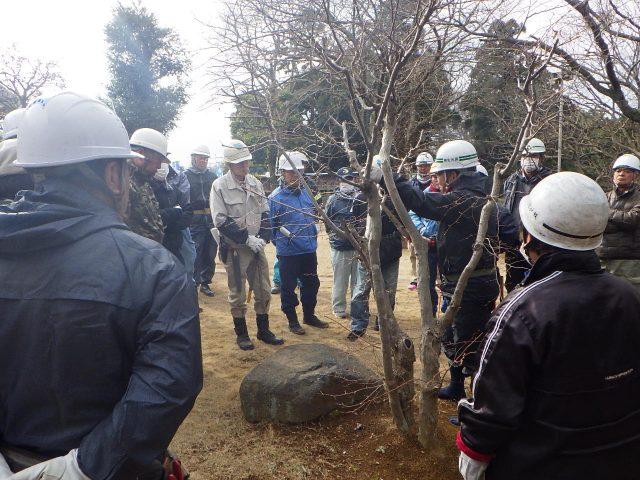 袖ケ浦市シルバー人材センターの会員の方々に樹木の剪定講習を行いました