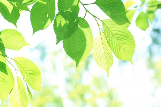 大変な庭木のお手入れは稲村造園におまかせください!