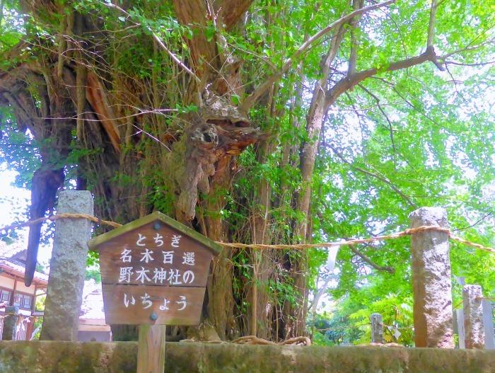 野木神社jpg