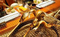 cat_midasi_eat