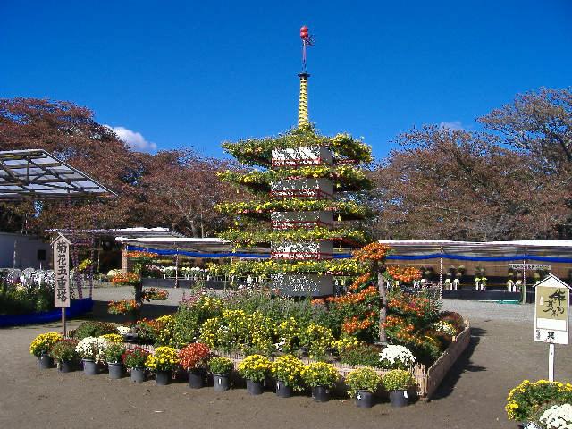 宮城の秋を彩る大菊花展★約2,500鉢の菊が県内全域から出品されます!