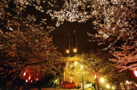 千葉県木更津市観光情報「太田山公園の夜桜電飾」