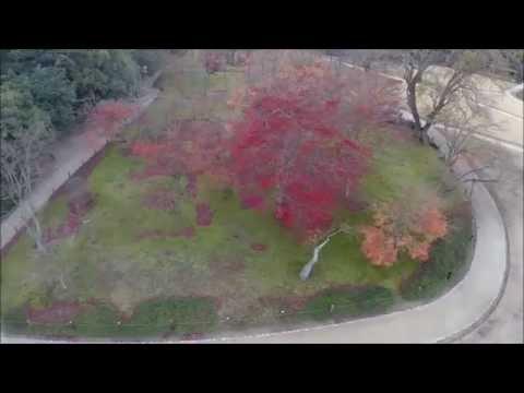 後楽園の四季「秋」
