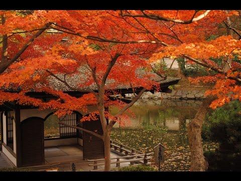 晩秋の紅葉渓庭園