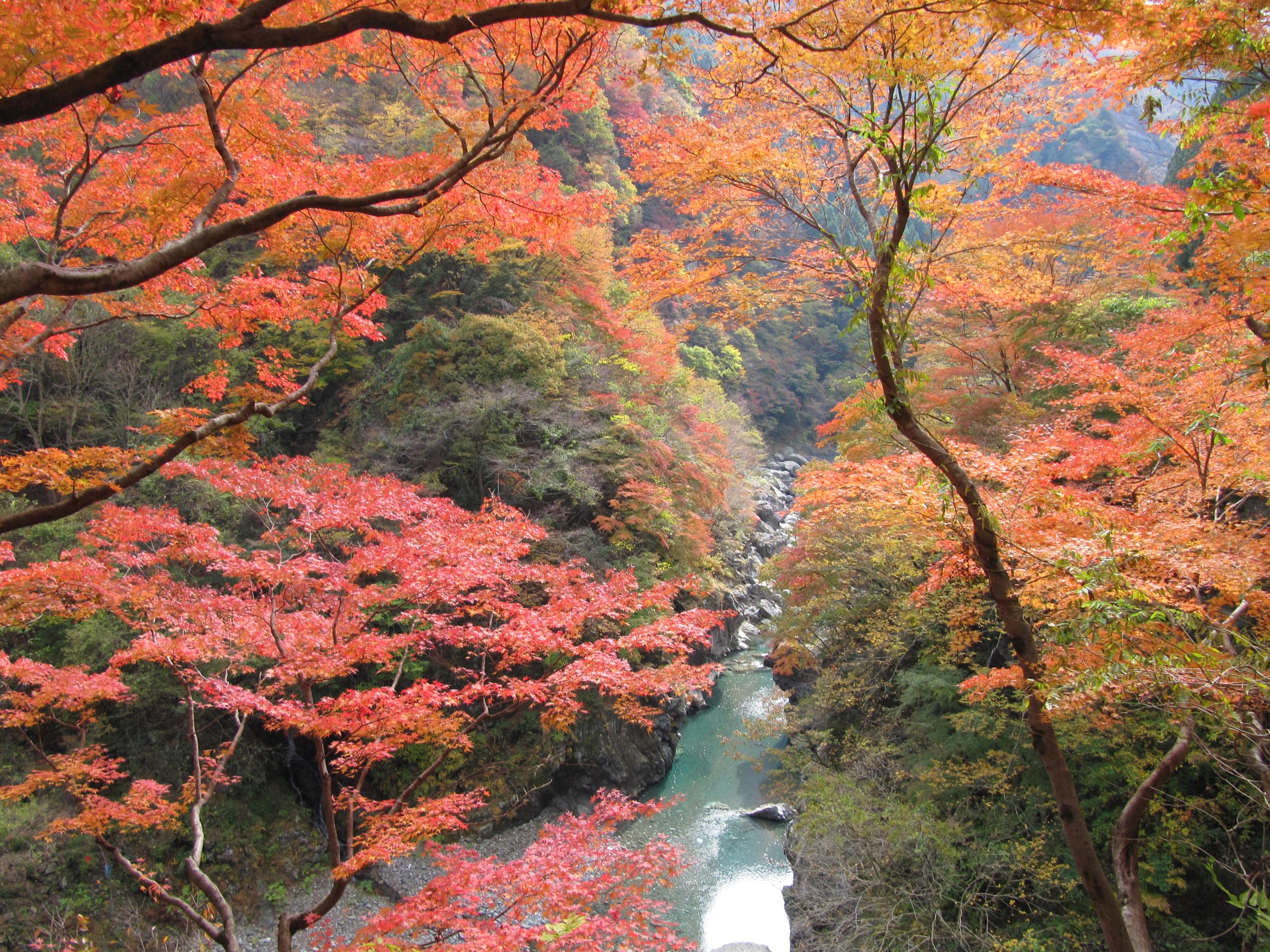 紅葉(大滝)