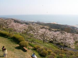 瀬戸内の絶景が見られる竜王山公園