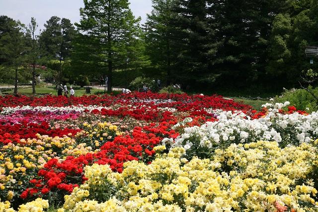 日本最古の公園の一つ「浜寺公園」