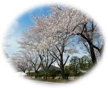 秋留台公園 春を紡ぐお筝の調べ
