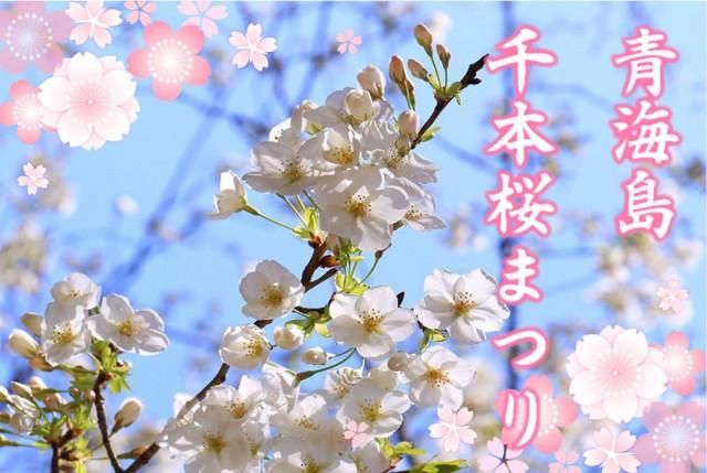 ながと青海島千本桜まつり開催!