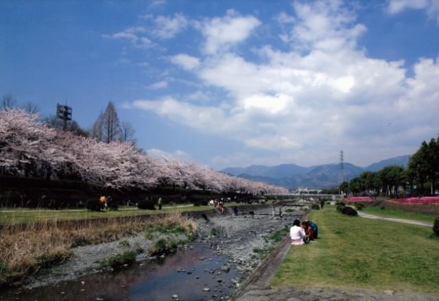 秦野市ハダ恋桜キャンペーン開催!