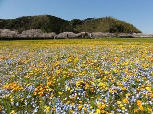 6種類のお花が咲き誇る「田んぼをつかったお花畑」