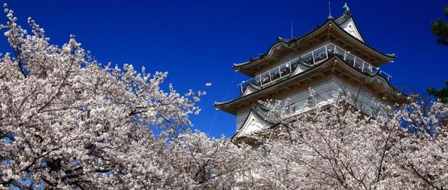 桜の名所いろいろ春爛慢の便り「2017小田原桜まつり」開催!