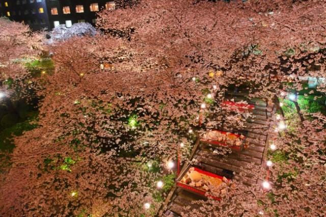 桜とともに日本文化を愉しむ「高輪 桜まつり2017」開催!