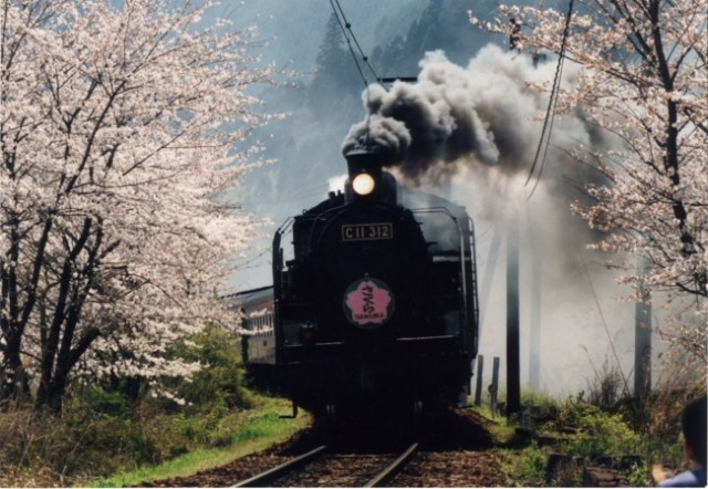 SLとのコラボが楽しめる「かわね桜まつり」開催!