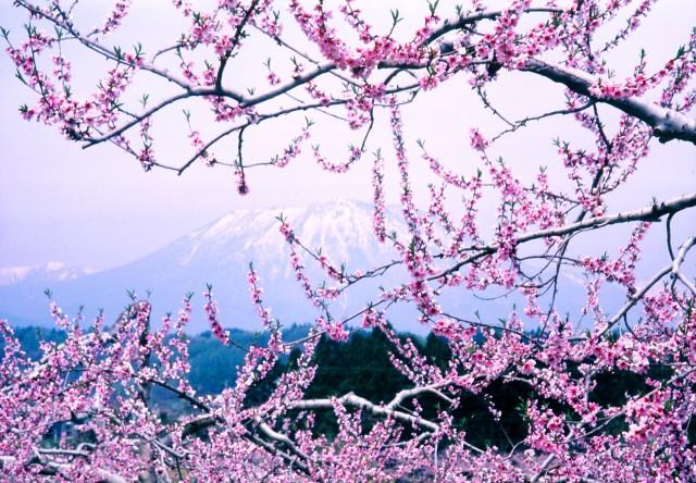 いいづなまち「花まつり」 開催中!