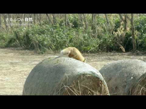 最北の村さるふつ―猿払村PR映像― 「自然編」