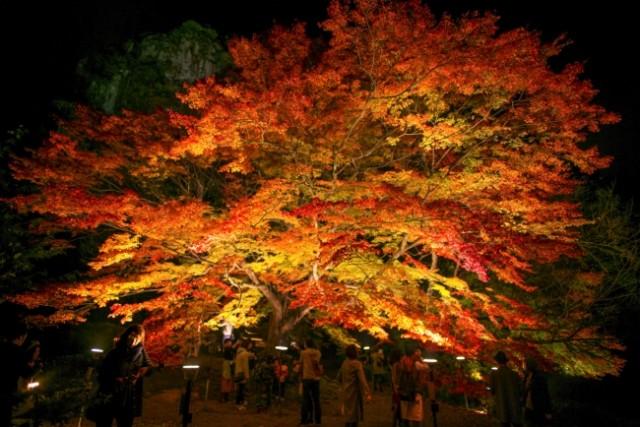 イルミ・秋冬イベント特集☆秋の絵巻・御船山楽園「紅葉まつりライトアップ」