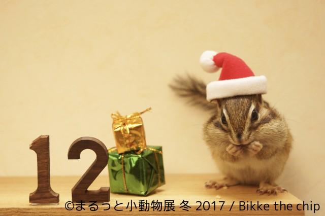 イルミ・秋冬イベント特集☆まるっと小動物展