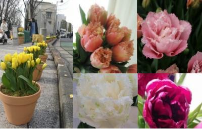 春を先どり!出荷量日本一、新潟のチューリップが楽しめるイベント「にいがたチューリップマルシェ2018」を表参道・新潟館ネスパスで開催