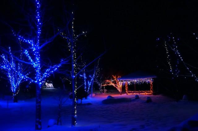 新春・イルミ特集☆雪原に広がる優しい光「冬のイルミネーション」