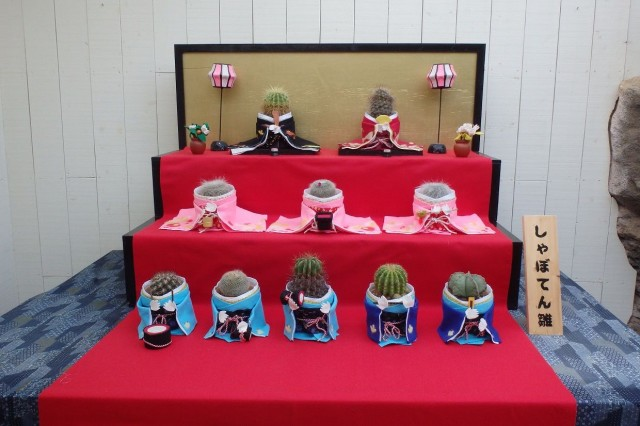 2月イベント・イルミ特集☆「しゃぼてんひなまつり」開催中!