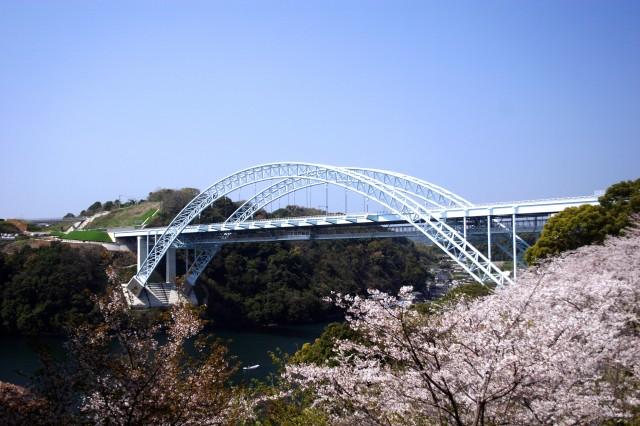 新西海橋と桜3