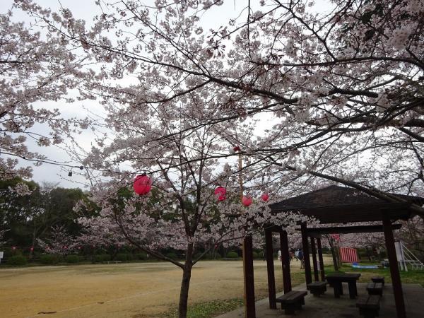 お花見・イベント特集☆「桜まつり」