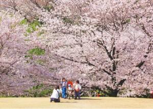 お花見・イベント特集☆大池公園桜まつり
