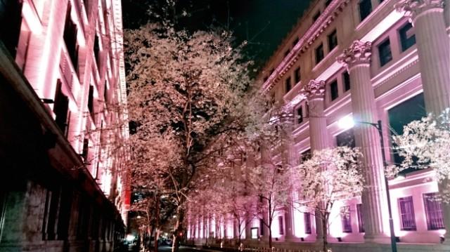 お花見・イベント特集☆日本橋の桜の開花「江戸桜祭り」