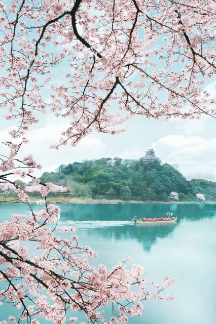 お花見・イベント特集☆桜を楽しむ春のクルーズ「犬山城遊覧船」