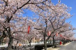 お花見・イベント特集☆十四川桜まつり(ジュウシガワサクラマツリ)