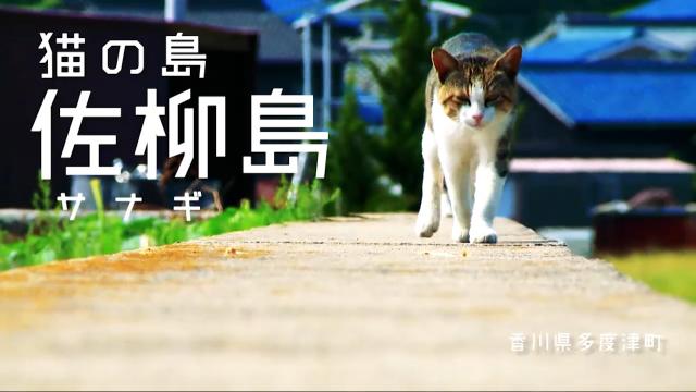 【猫の島】多度津町の佐柳島からPV届きました!