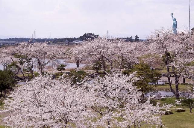 春・桜・出会い特集☆「おいらせ町春まつり」