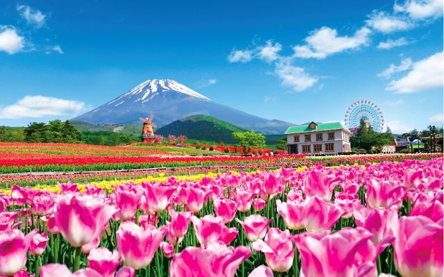 春・桜・出会い特集☆20万本のチューリップと富士山の競演「天空のチューリップ祭り」