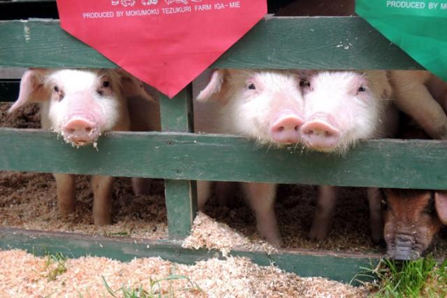 春・桜・出会い特集☆日本一の豚の祭典「とんとん祭り」