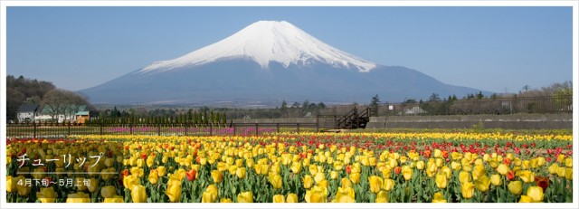春・桜・出会い特集☆花の都公園スプリングフェスティバル「2018春の息吹」