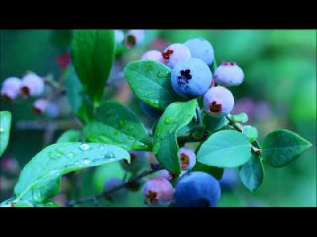 【沼田市観光PR動画】天空の城下町 沼田(ミドル)