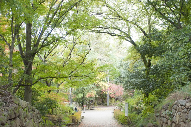 甲斐国の総鎮護、「武田神社」の森がすごい!・甲府市