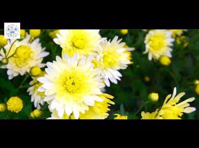 小美玉市観光PR動画(日本語版)・茨城県小美玉市