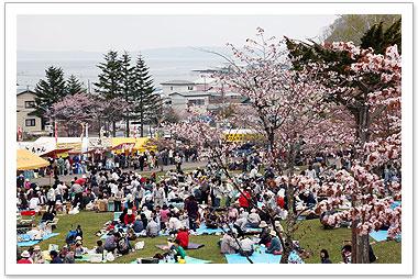 akkeshi-sakura