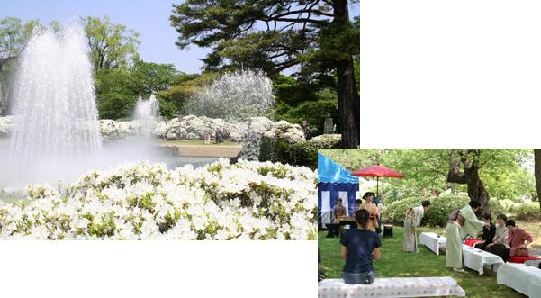 純白に咲き誇る「白つつじまつり」・長井市